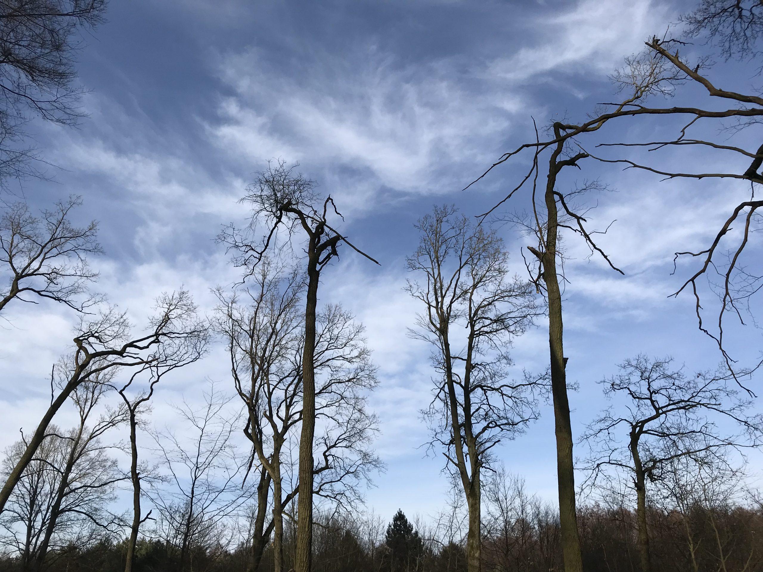 Umstrittene Baumfällungen