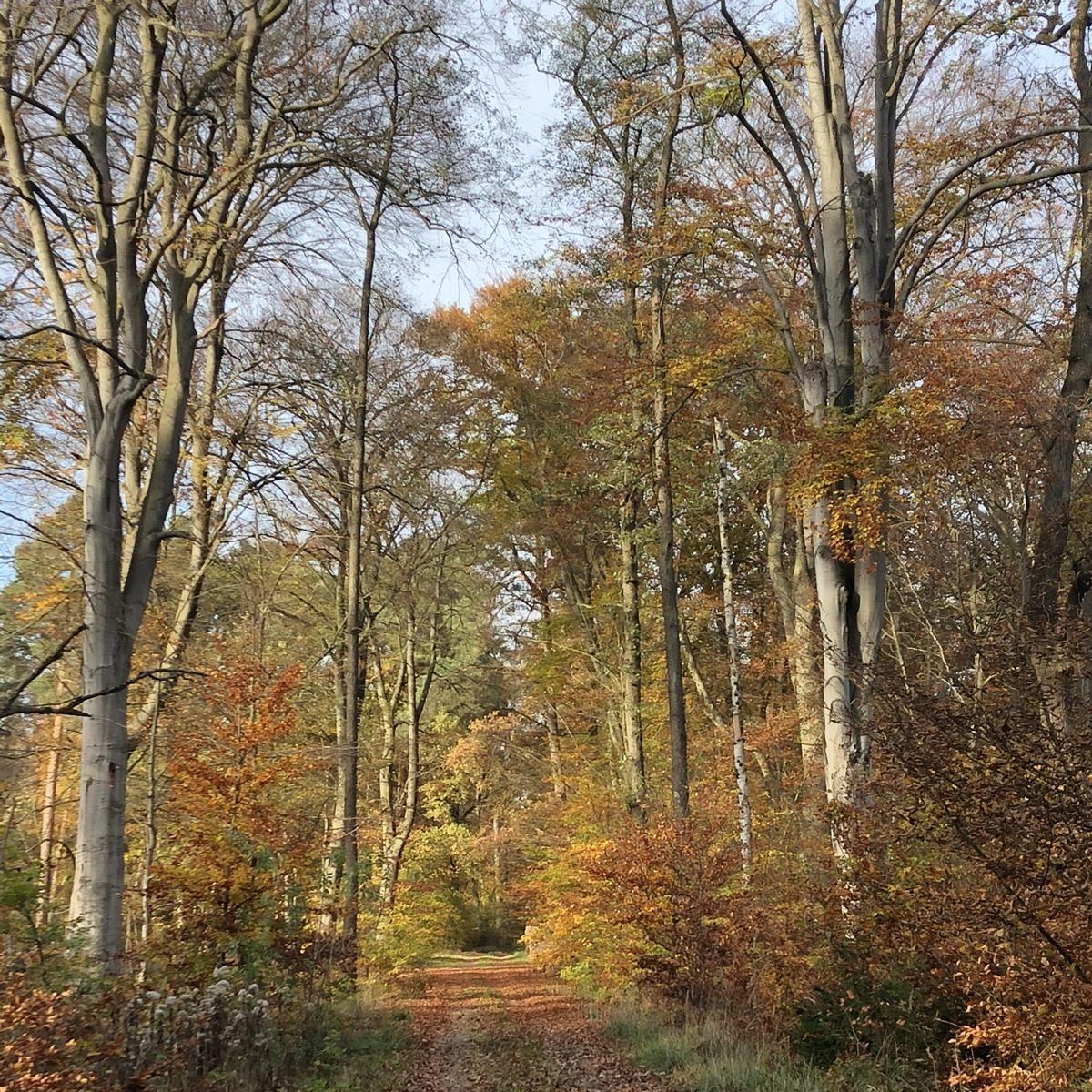 Zukunft für die heimischen Wälder sichern